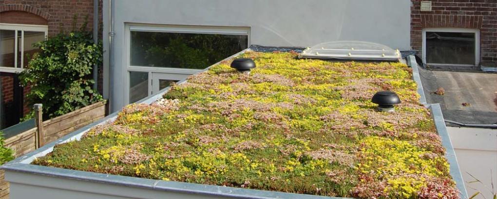 ประชาชนในเมืองสามารถเข้าร่วมในการทำหลังคาบ้านให้เป็น Green Roof