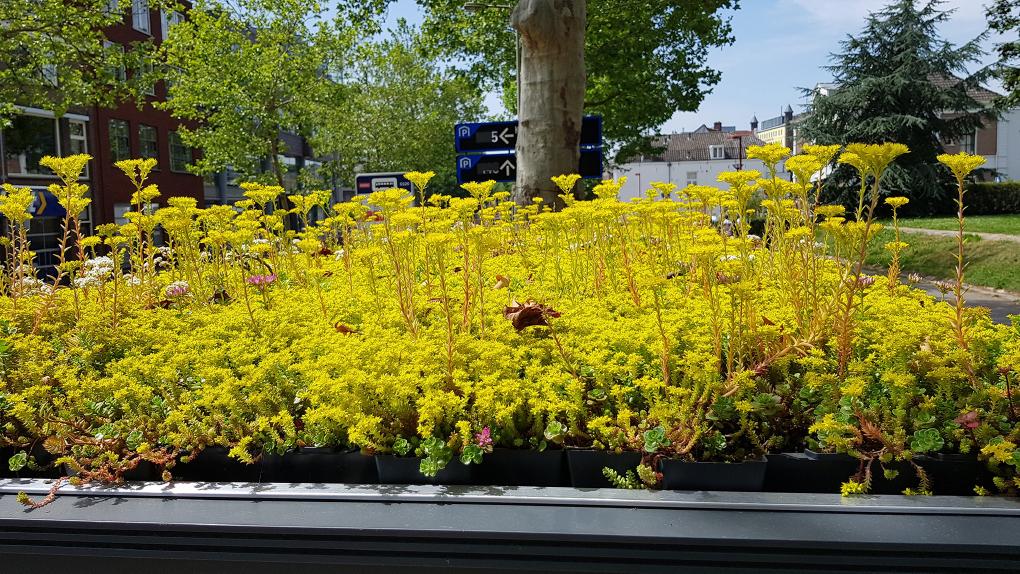 การปลูกสวนดอกไม้บนหลังคาให้เป็นที่อยู่ของผึ้งและแมลง