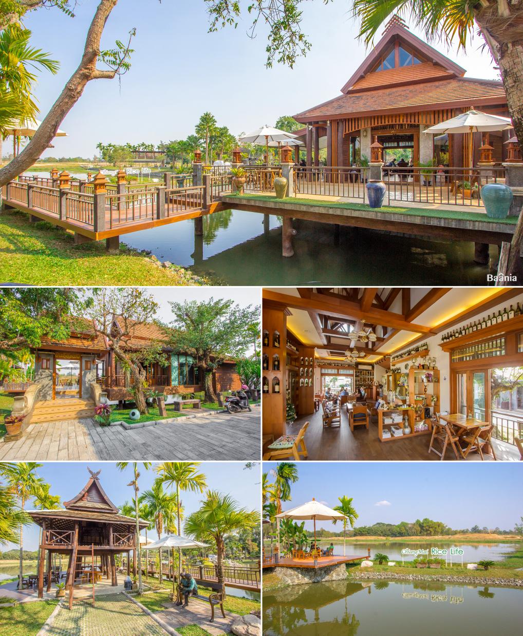 Chiangmai Rice Life