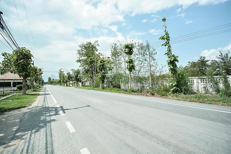 กรีนวิลล่า ป่าสัก-ลำพูน - บรรยากาศ - 1