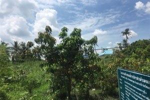 ขาย ที่ดิน ตำบลเกาะเกร็ด อำเภอปากเกร็ด จังหวัดนนทบุรี