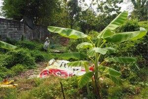 ขาย ที่ดิน แขวงบางปะกอก เขตราษฎร์บูรณะ กรุงเทพมหานคร