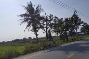 ขาย ที่ดิน ตำบลไทรน้อย อำเภอไทรน้อย จังหวัดนนทบุรี
