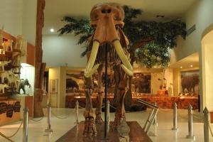 พิพิธภัณฑ์ไม้กลายเป็นหินและทรัพยากรธรณีภาคตะวันออกเฉียงเหนือ จังหวัดนครราชสีมา เฉลิมพระเกียรติ