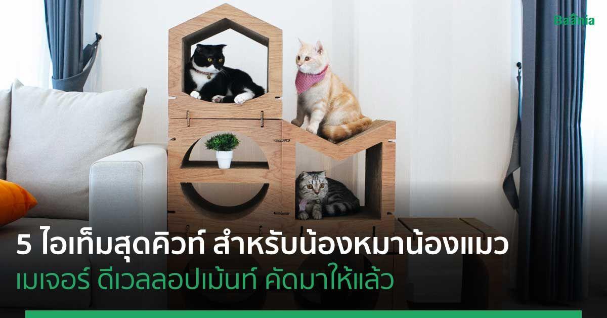 5 ไอเท็มสุดคิวท์สำหรับน้องหมาน้องแมว ที่เมเจอร์ ดีเวลลอปเม้นท์คัดมาให้