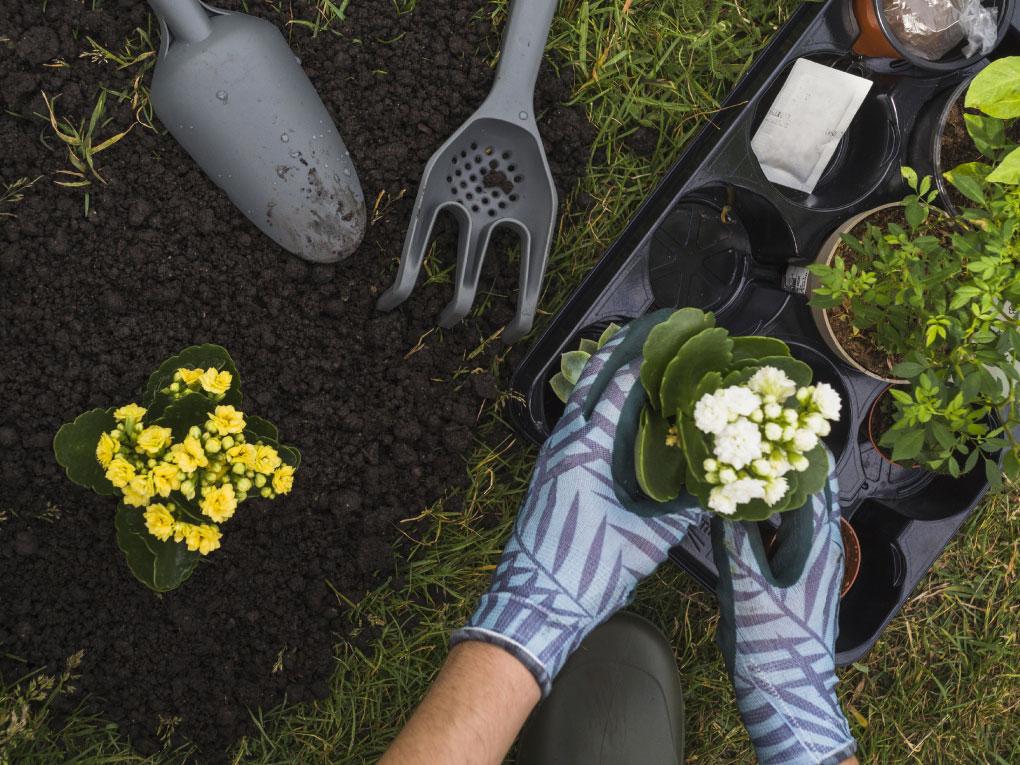 สร้างสมดุลให้สวน