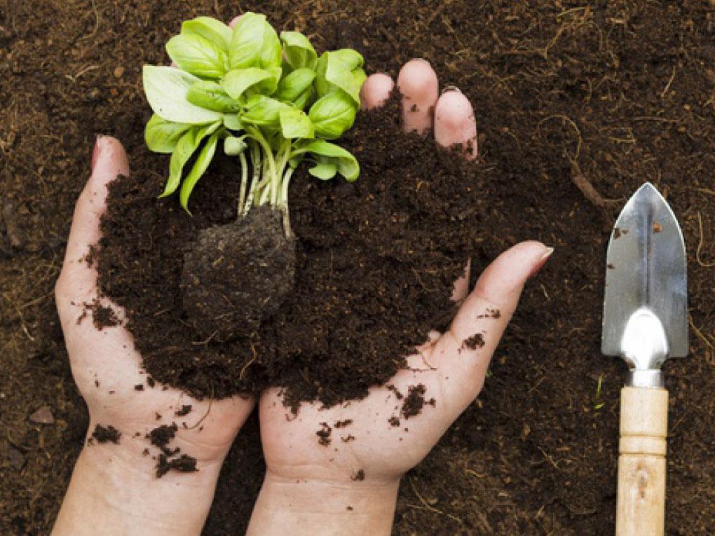 ลงพืชคลุมดิน