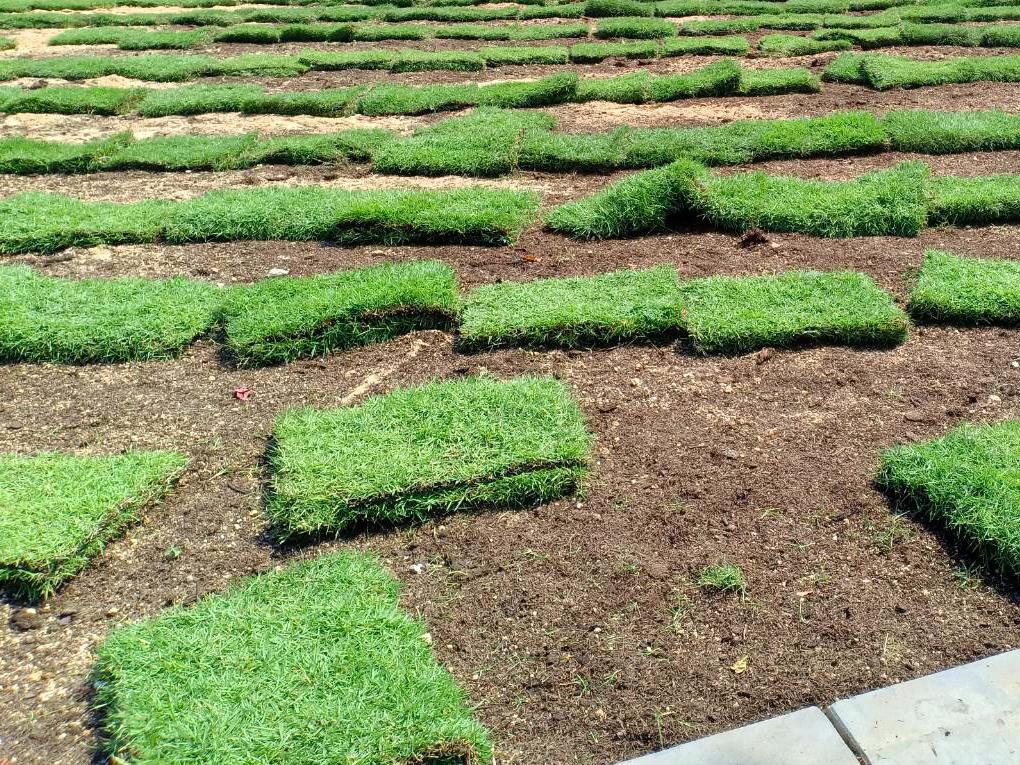 ปลูกหญ้าด้วยตนเอง