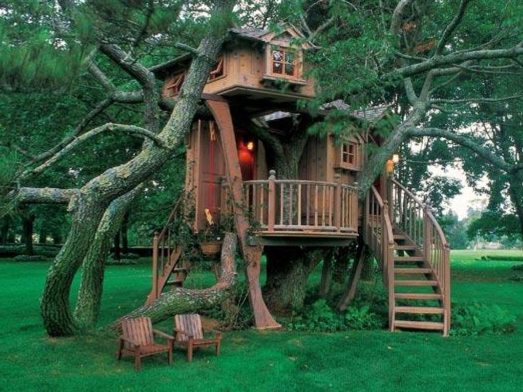 วางแผนก่อนสร้างบ้านต้นไม้