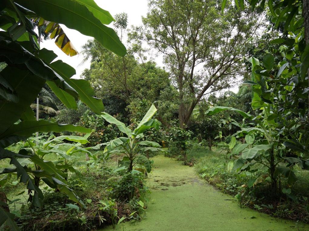 สวนทีงูชอบ