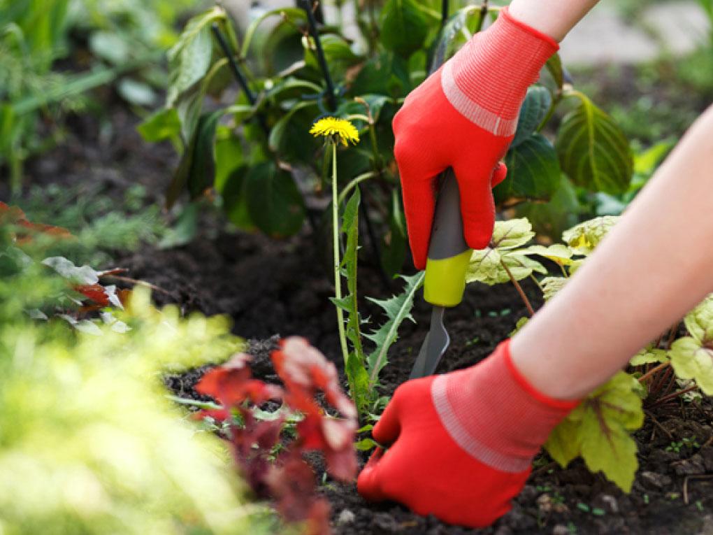 ปลูกพืชอื่น