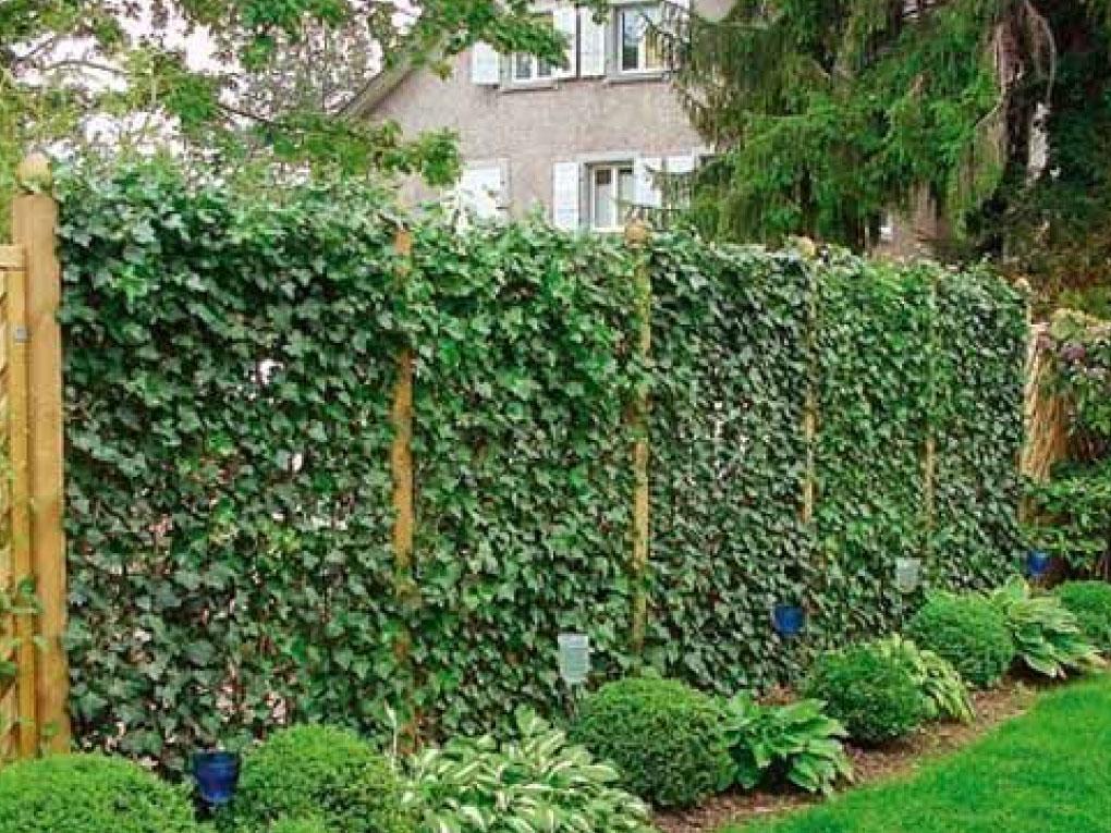 รั้วบ้านต้นไม้