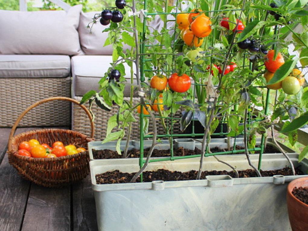 การปลูกผักตามฤดูกาล