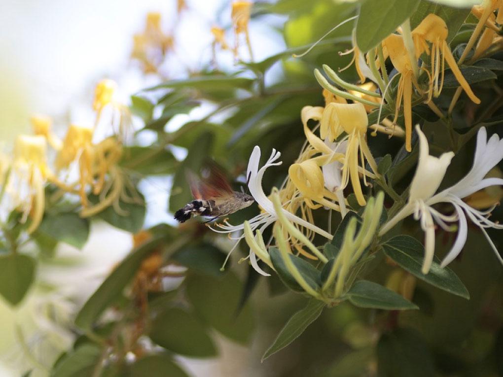 สายน้ำผึ้ง
