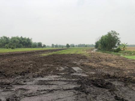 ขาย ที่ดิน ที่ดินเปล่า บ้านนา นครนายก ราคาพิเศษ  100 ตร.ว บรรยากาศบ้านสวนเกษตร