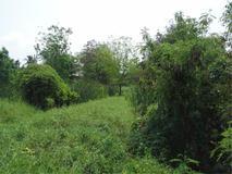 ขาย ที่ดิน ตำบลบางขุนกอง อำเภอบางกรวย จังหวัดนนทบุรี